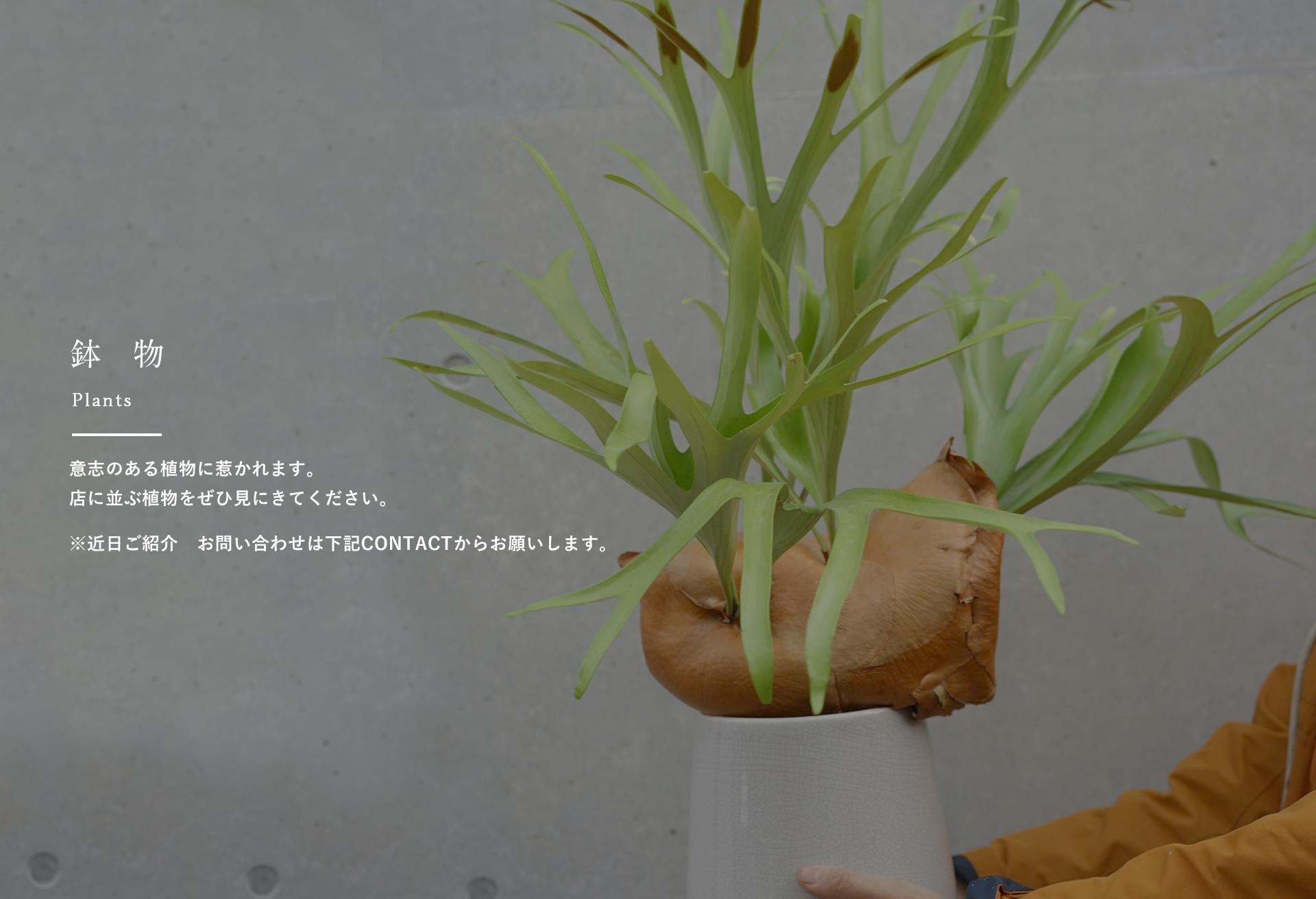 鉢物 plants